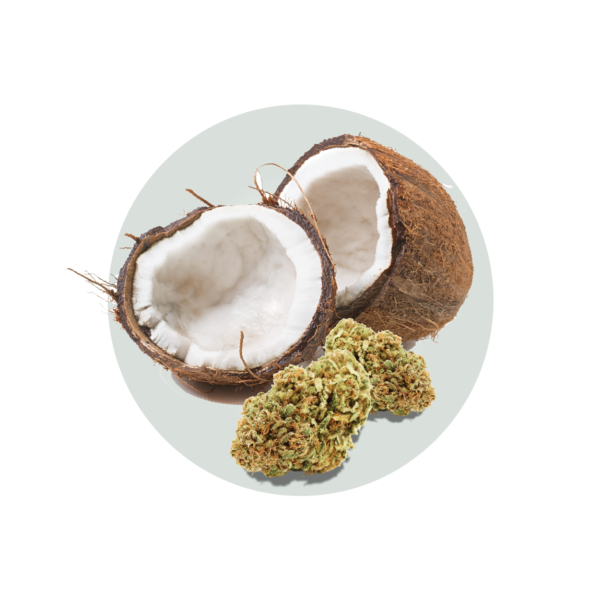 Coconut MCT Oil 01