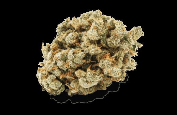 Grapefruit GG1 Bud