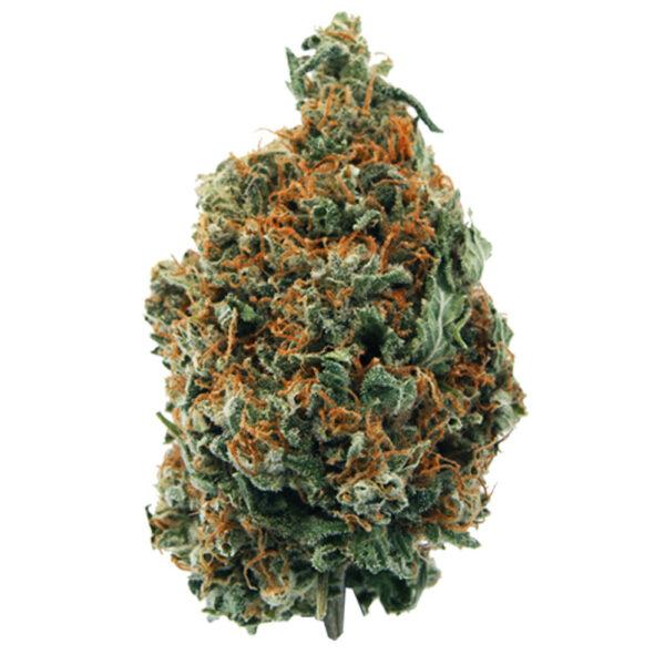 Souvenir Chemdog Sativa Bud